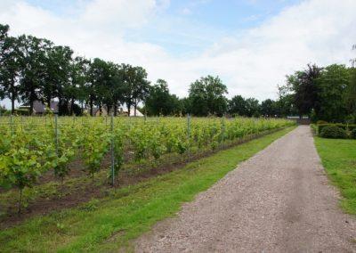 wijngaard-02